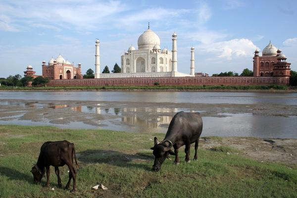 Taj_Mahal-10-1.jpg