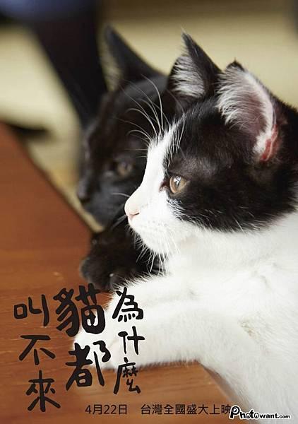 為什麼貓都叫不來.jpg