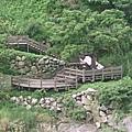 秀姑巒溪-02