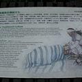 TAROKO傳統文化