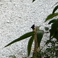 不知名鳥2