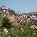 花叢內照片1