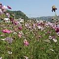 花叢內照片2