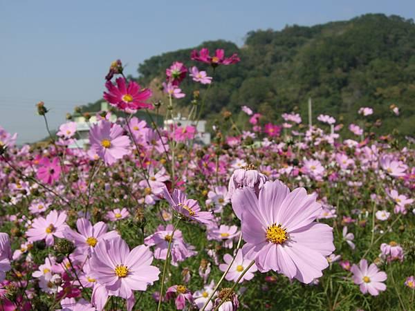第五區花叢內照片02