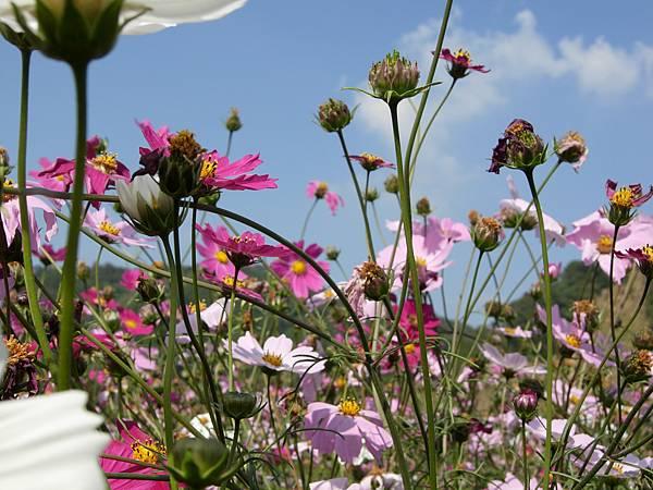 第五區花叢內照片05