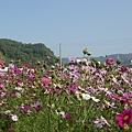 第五區花叢內照片06