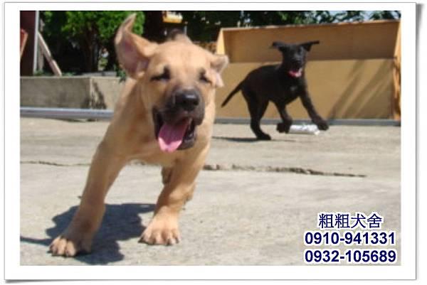 2011.05.28高山犬幼犬~1