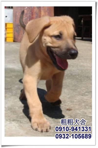 2011.05.28高山犬幼犬~2