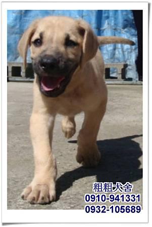 2011.05.28高山犬幼犬~3