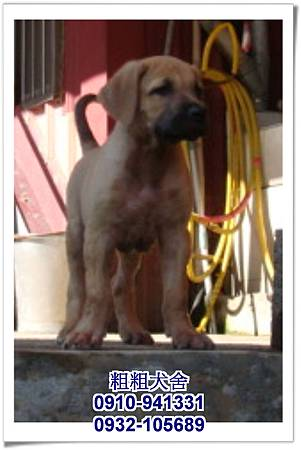 2011.05.28高山犬幼犬~4