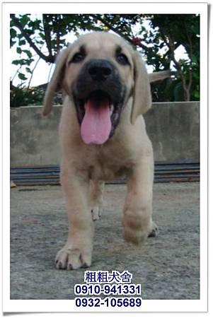 2011.05.28高山犬幼犬~5