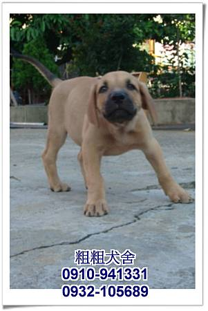 2011.05.28高山犬幼犬~6