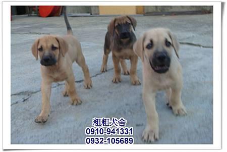 2011.05.28高山犬幼犬~7