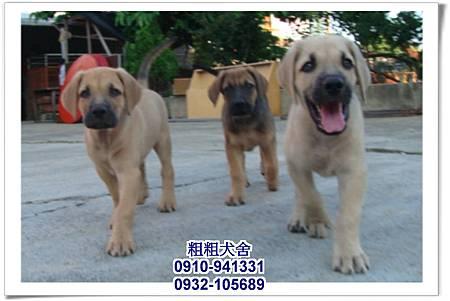 2011.05.28高山犬幼犬~8