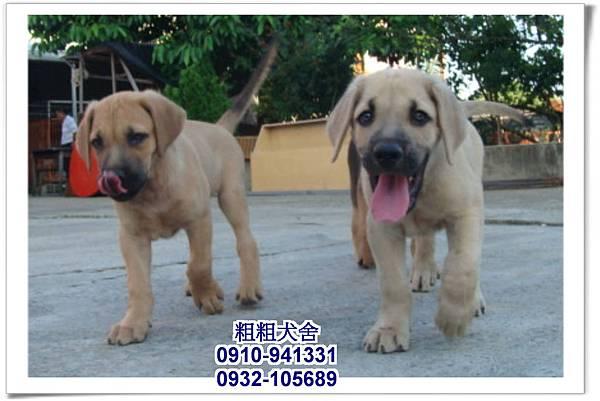 2011.05.28高山犬幼犬~9