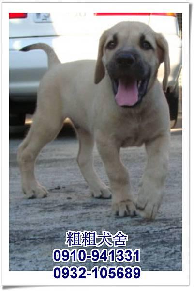 2011.05.28高山犬幼犬~10