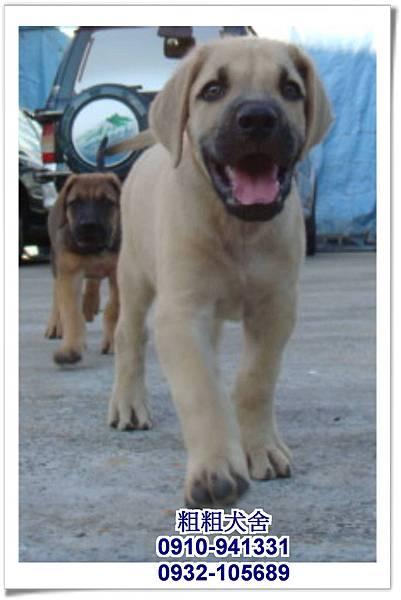 2011.05.28高山犬幼犬~11
