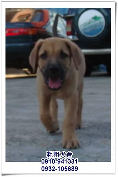 2011.05.28高山犬幼犬~12