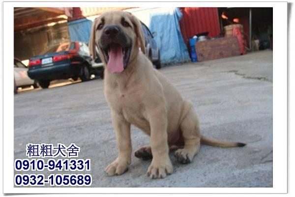 2011.05.28高山犬幼犬~13
