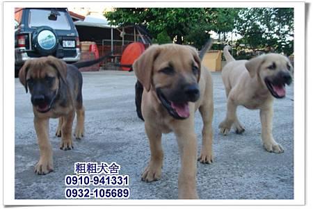 2011.05.28高山犬幼犬~15