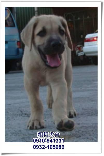 2011.05.28高山犬幼犬~16