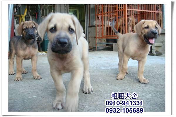 2011.05.28高山犬幼犬~17