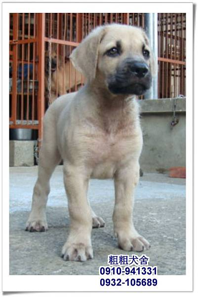 2011.05.28高山犬幼犬~18