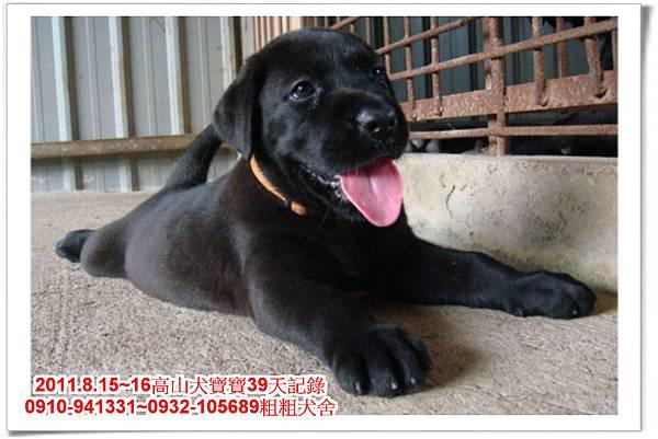 粗粗犬舍2011.8.15~16高山犬寶寶~276.jpg
