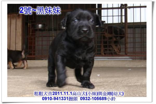 2011.11.1高山犬黑色種母(小妹)第一胎~110.jpg