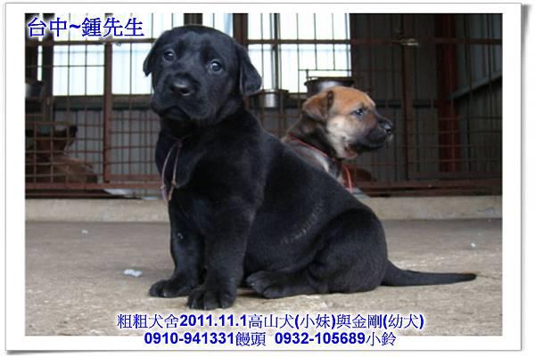 2011.11.1高山犬黑色種母(小妹)第一胎~132.jpg