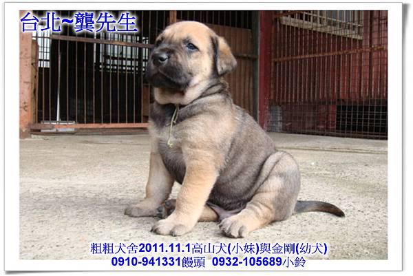 2011.11.1高山犬黑色種母(小妹)第一胎~160.jpg