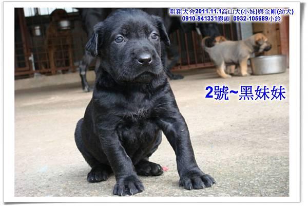 2011.11.1高山犬黑色種母(小妹)第一胎~172.jpg