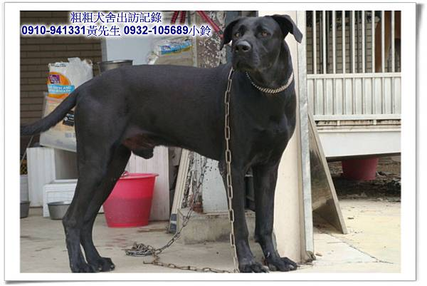 2011.04.12(U莉)(3.29丁丁)黑寶~霧峰江老闆~26.jpg
