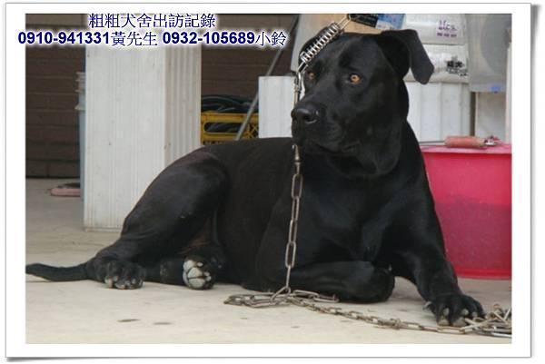 2011.04.12(U莉)(3.29丁丁)黑寶~霧峰江老闆~28.jpg