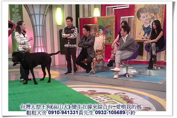 粗粗犬舍高山犬(蠻牛)參加緯來綜合台-愛喲我的媽~32.jpg