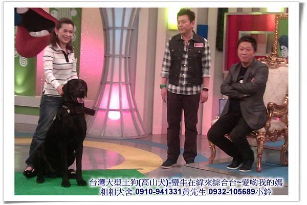 粗粗犬舍高山犬(蠻牛)參加緯來綜合台-愛喲我的媽~35.jpg