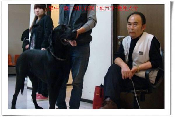 蠻牛一歲三個月在陶子藝言堂~粗粗犬舍~3.jpg