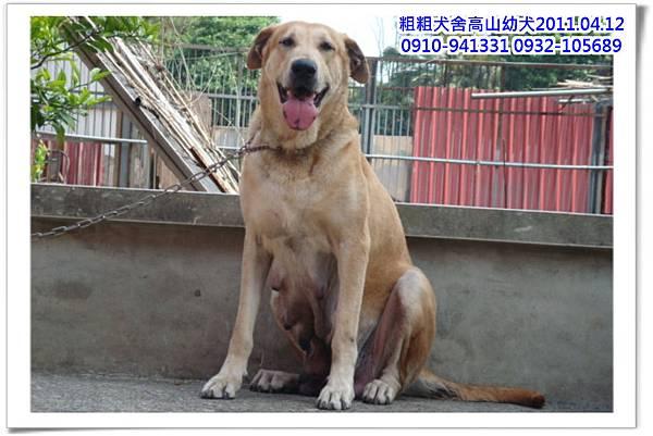 高山犬小麗~1.jpg