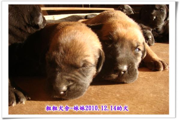 2010.12.14~01.jpg