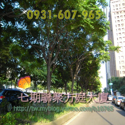 松樹0401 074.jpg
