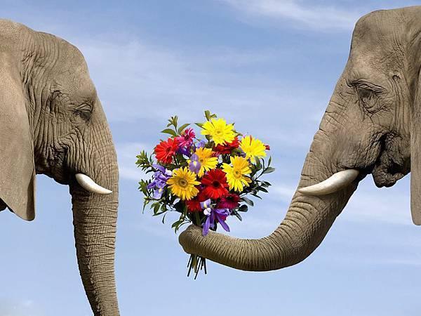 大象情人節