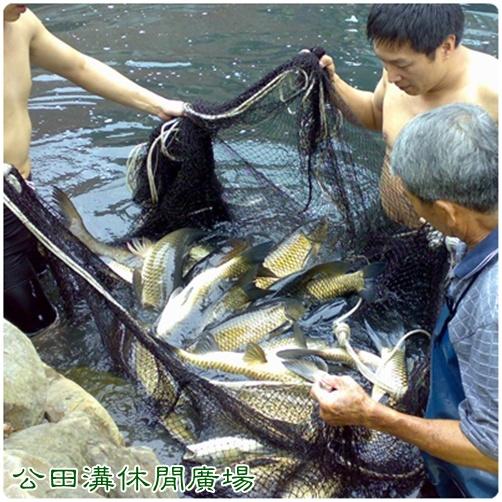 草魚.jpg
