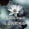 11014988_1600251760190859_4021001056183799667_n.jpg