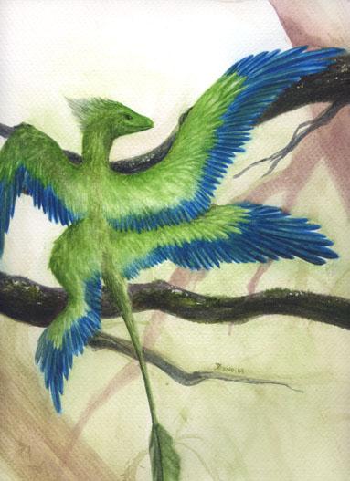 小盜龍Microraptor掃描器版4.jpg