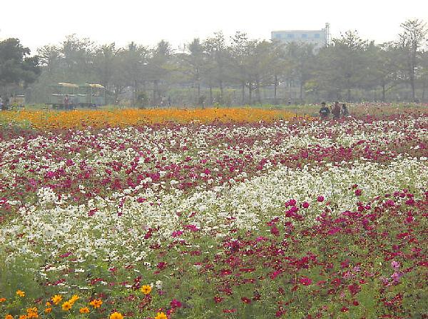 台糖南州糖廠二景.jpg