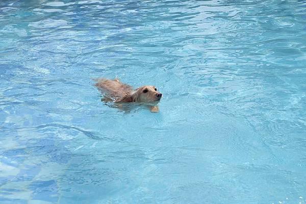 女兒游泳.jpg