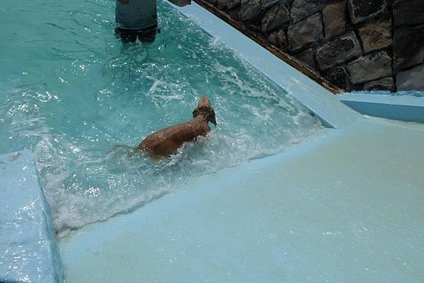 q游泳 (1).JPG