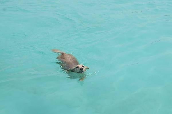 q游泳 (4).JPG