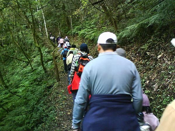 一群人努力爬神木區