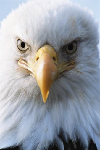 eagle_eyes